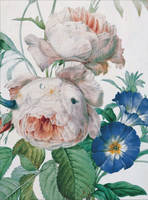 Redoute Flower Paintings Bumper Card...