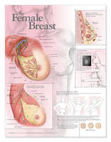 The Female Breast Anatomical Chart