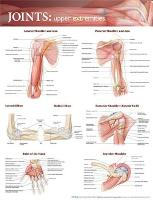 Joints of the Upper Extremities...