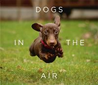 Dogs in the Air