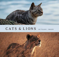 Cats and Lions