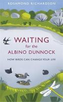 Waiting for the Albino Dunnock: How...