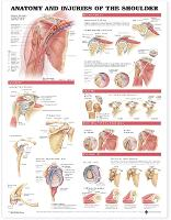 Anatomy and Injuries of the Shoulder...