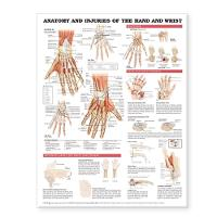 Anatomy and Injuries of the Hand and...
