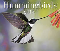 Hummingbirds 2015