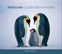 Penguins: Close Encounters