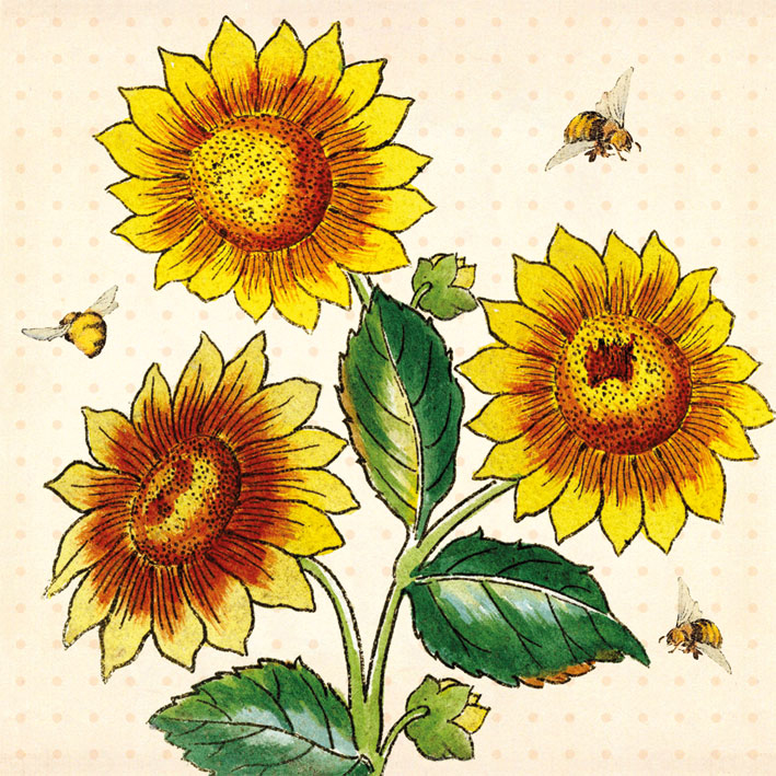 Sunflowers greeting card museums galleries foyles bookstore sunflowers greeting card m4hsunfo