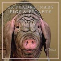Extraordinary Pigs & Piglets Calendar