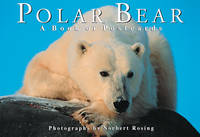 Polar Bear: A Book of Postcards