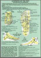 Acupoints of the Feet