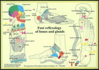Foot Reflexology of Bones & Glands