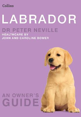 Labrador (Collins Dog Owner's Guide)