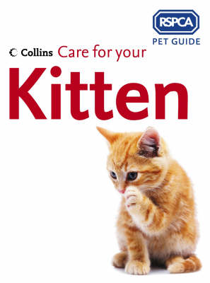 Care for Your Kitten