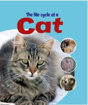 Learning About Life Cycles: The Life Cycle of A Cat