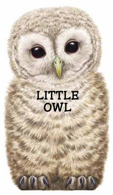 Little Owl: Look at Me