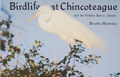 Birdlife at Chincoteague and the Virginia Barrier Islands