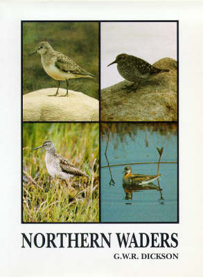Northern Waders