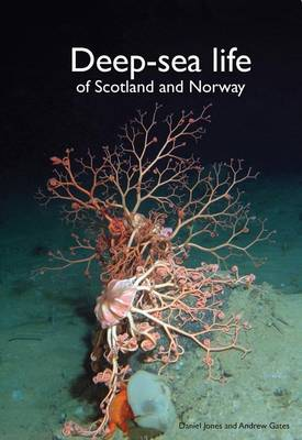 Deep-Sea Life of Scotland and Norway