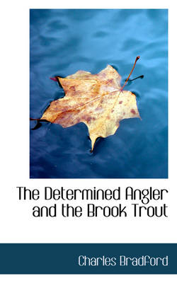 The Determined Angler and the Brook Trout