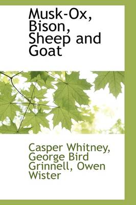 Musk-Ox, Bison, Sheep and Goat