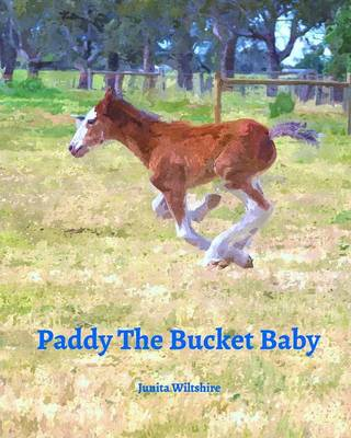 Paddy the Bucket Baby