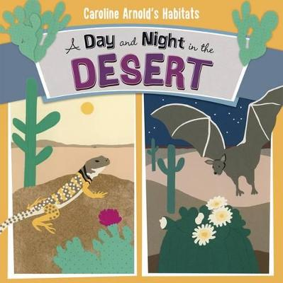 Day and Night in the Sonoran Desert