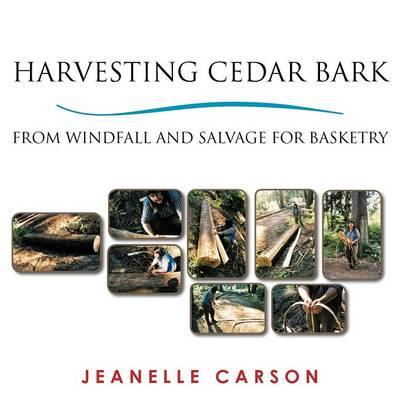 Harvesting Cedar Bark: From Windfall and Salvage for Basketry