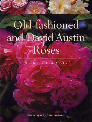 Old-Fashioned and David Austin Roses