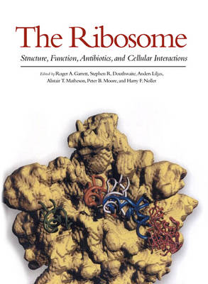 The Ribosome: Structure, Function, Antibiotics and Cellular Interactions