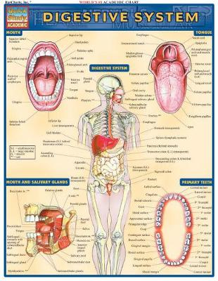 Digestive System: Reference Guide