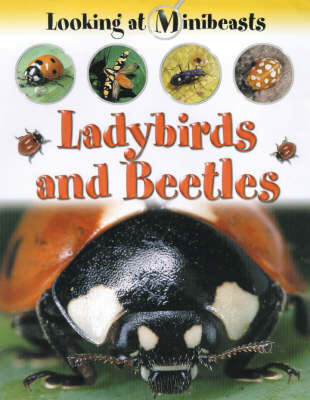 Ladybirds and Beetles