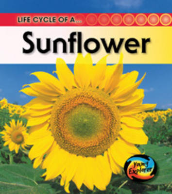The Life Of A Sunflower