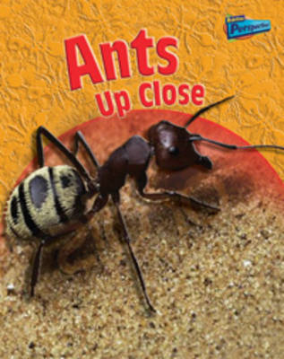 Ants Up-close