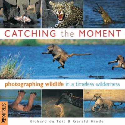 Catching the Moment: Photographing Wildlife in a Timeless Wilderness