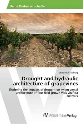 Drought and Hydraulic Architecture of Grapevines