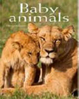 Baby Animals: Pocket Book