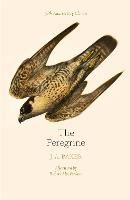 The Peregrine: 50th Anniversary...