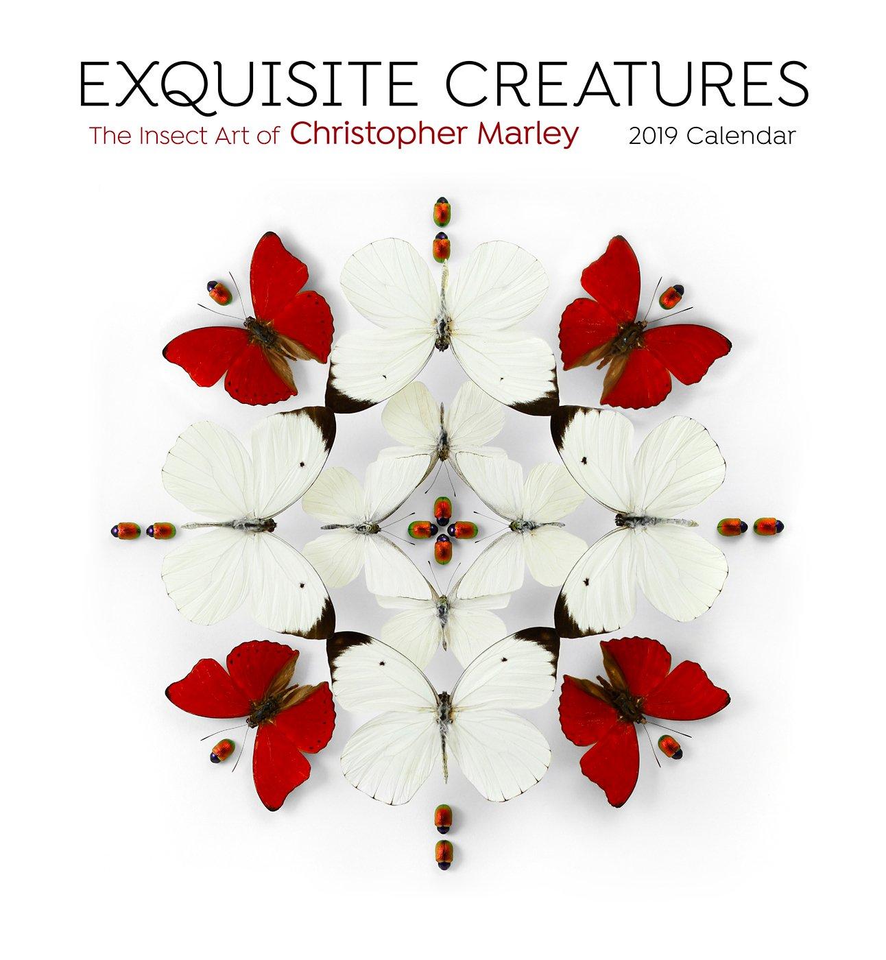 Exquisite Creatures the Insect Art of...