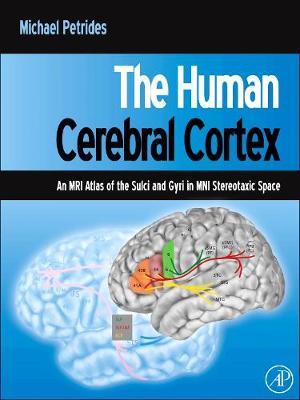 The Human Cerebral Cortex: An MRI Atlas of the Sulci and Gyri in MNI Stereotaxic Space
