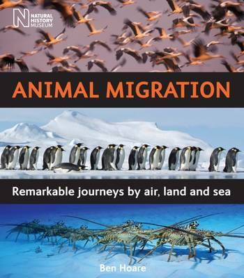 Animal Migration: Remarkable Journeys by Air, Land and Sea