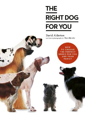 Your Dog Selector: The complete guide to picking the perfect breed