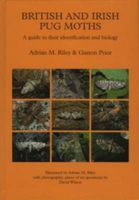 British and Irish Pug Moths - a Guide to their Identification and Biology