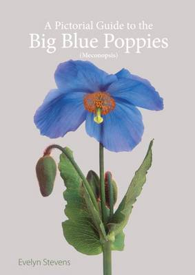 A Pictorial Guide to the Big Blue Poppies (Meconopsis)