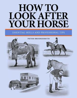 How To Look After Your Horse: Essential Skills and Professional Tips