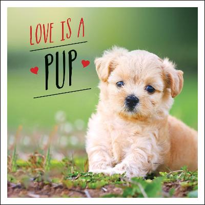 Love is a Pup: A Dog-Tastic Celebration of the World's Cutest Puppies