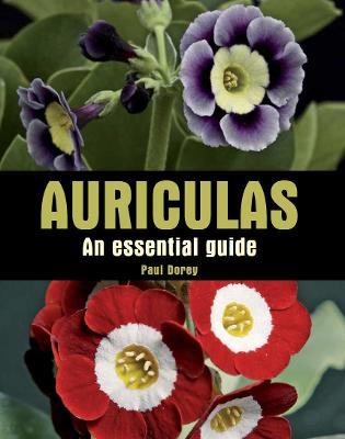 Auriculas: An Essential Guide