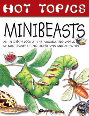 Hot Topics: Minibeasts