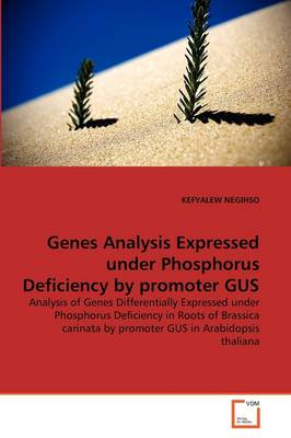 Genes Analysis Expressed Under Phosphorus Deficiency by Promoter Gus