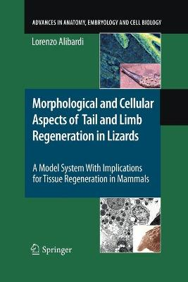 Morphological and Cellular Aspects of Tail and Limb Regeneration in Lizards: A Model System With Implications for Tissue Regeneration in Mammals