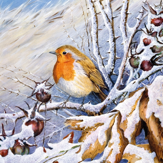 Xmas Charity Robin on Snowy Bough Large Sqr Pack of 5 Cards